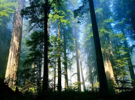 interpretasi-batasan-hutan
