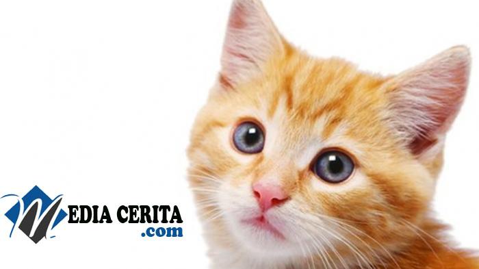 Pangeran Kucing